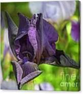 Iris 9 Canvas Print