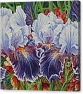 Iris Blooms Canvas Print
