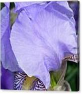 Iris Close Up 2 Canvas Print