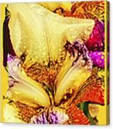 Iris - Customized Canvas Print