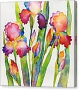 Iris Elegance Canvas Print
