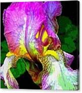 Iris Flashy Splash Of Color Canvas Print