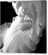 Iris Flower In Black And White Canvas Print