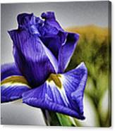 Iris Flower Macro Canvas Print