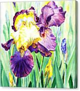 Iris Flowers Garden Canvas Print