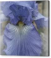 Iris Heart Canvas Print