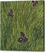 Iris In A Field Canvas Print