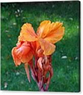 Iris In Autumn Canvas Print
