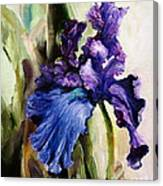 Iris In Bloom 2 Canvas Print