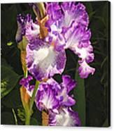 Iris In June Canvas Print