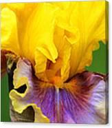 iris in living color photograph by regina geoghan. Black Bedroom Furniture Sets. Home Design Ideas