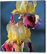 Iris In The Morning Canvas Print