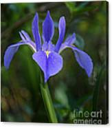 Iris In The Spring Canvas Print