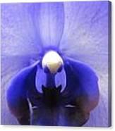 Iris Inside Canvas Print