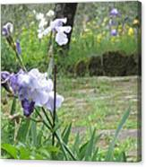 Iris On The Path Canvas Print