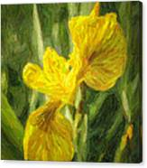 Iris Pseudacorus Yellow Flag Iris Canvas Print