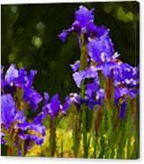 Iris Radiance Canvas Print