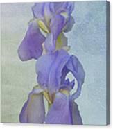 Iris Texture Canvas Print