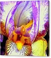 Iris Up Close And Personal Macro Canvas Print