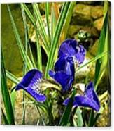 Iris With Frog Canvas Print