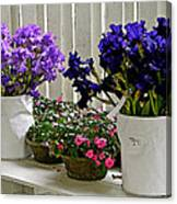 Irises And Impatiens Canvas Print