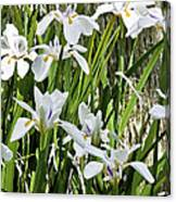 Irises Dancing In The Sun Painted Canvas Print