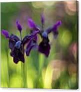 Irises Depth Canvas Print