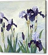 Irises Purple Flowers Painting Floral K. Joann Russell                                           Canvas Print