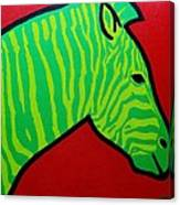 Irish Zebra Canvas Print
