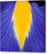 Irresistible Iris Canvas Print