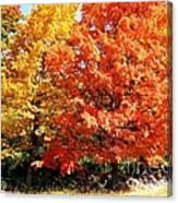 Is Autumn Already Canvas Print
