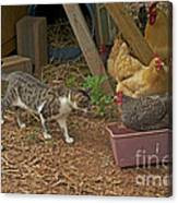 Is She Really In My Litter Pan Canvas Print