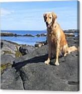 Island Dog Canvas Print