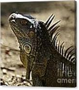 Island Lizards Three Canvas Print