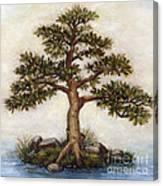 Island Tree Canvas Print
