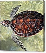 Island Turtle Canvas Print