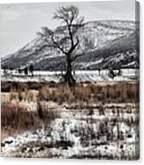 Isolation In Yellowstone Canvas Print
