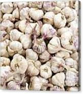 Italian Garlic Bulbs Canvas Print
