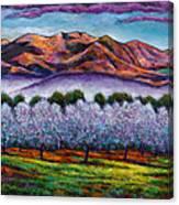 Italian Orchard Canvas Print