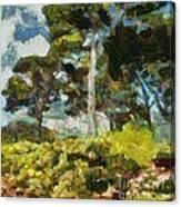 Italian Stone Pine Canvas Print