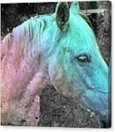 It's 1970 And I Want A Groovy Rainbow Pony Canvas Print