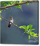It's A Big World Out There... Canvas Print
