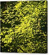 It's Autumn Time Canvas Print