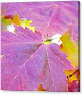 It's Fall Canvas Print