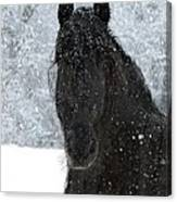 It's Friesian Out Here Canvas Print