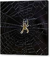 Itsy Bitsy Spider My Ass 2 Canvas Print