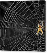 Itsy Bitsy Spider My Ass 3 Canvas Print