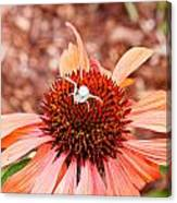 Itsy Bitsy Spider Walking On The Flower Canvas Print