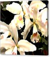 Ivory Cattleya Orchids Canvas Print
