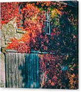 Ivy Covered Barn Canvas Print